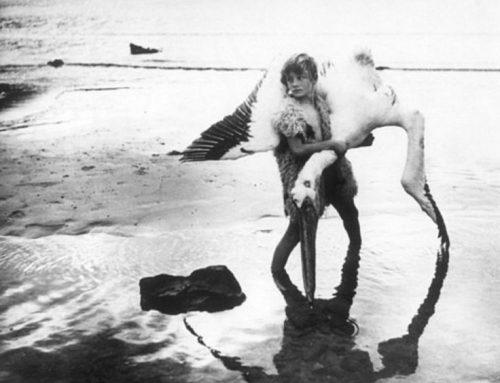 """Cineforum: Jóvenes afroditas. Tercera película del ciclo de cine """"Las consecuencias del amor"""""""